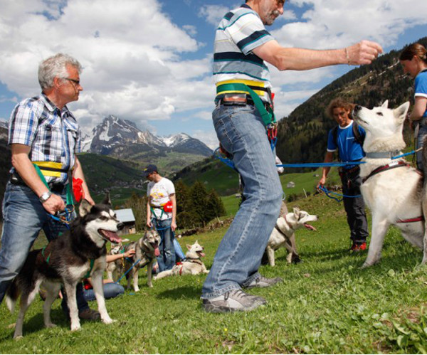 Leadership mit Huskies